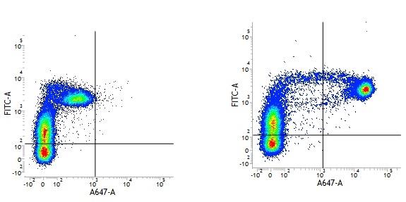 Mouse IgG2a Negative Control Antibody thumbnail image 1