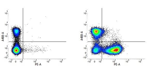 Rat IgG1 Negative Control Antibody gallery image 1