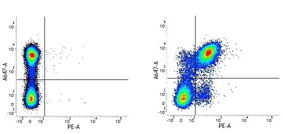 Rat IgG2a Negative Control Antibody gallery image 1