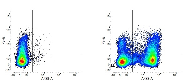 Rat IgG2a Negative Control Antibody gallery image 2