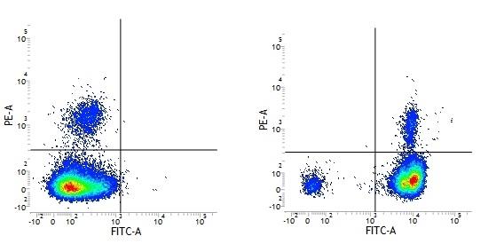 Rat IgG2b Negative Control Antibody gallery image 1