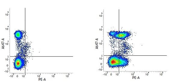 Rat IgG2b Negative Control Antibody gallery image 2