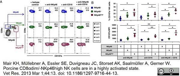 CD107a Antibody | 4E9/11 gallery image 3