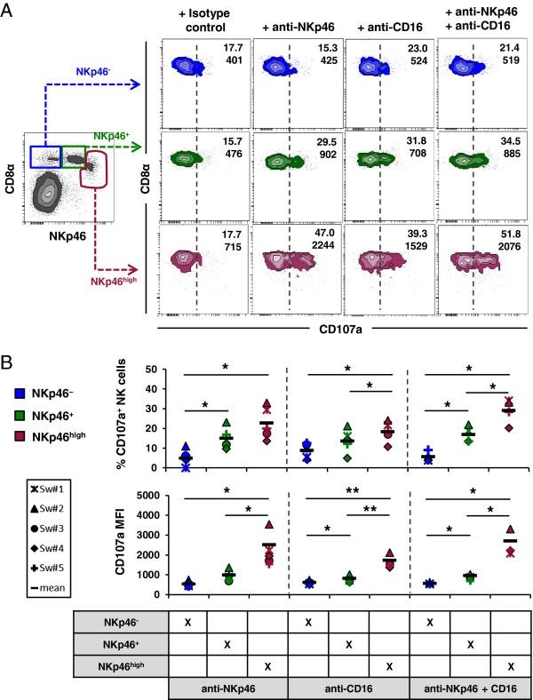CD107a Antibody | 4E9/11 gallery image 6