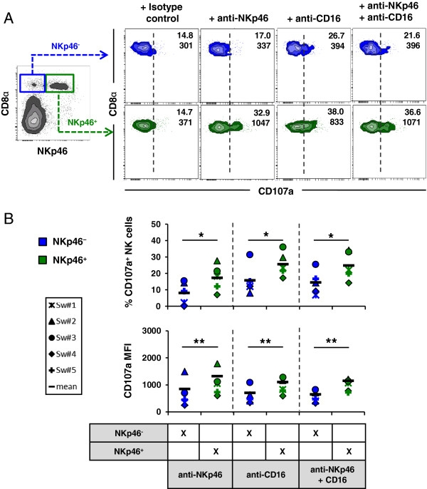 CD107a Antibody | 4E9/11 gallery image 4