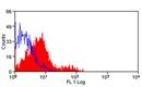 CD117 Antibody | 2B8/BM thumbnail image 1