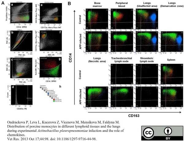 CD14 Antibody | MIL2 gallery image 2
