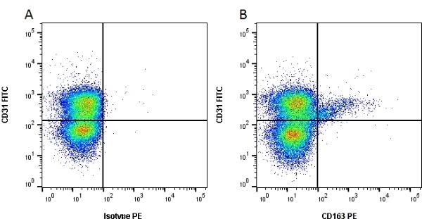 CD163 Antibody   2A10/11 gallery image 1