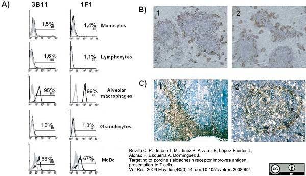 CD169 Antibody | 3B11/11 gallery image 1