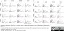 CD203a Antibody | PM18-7 thumbnail image 2