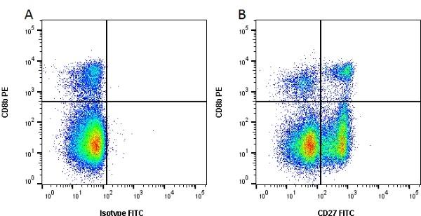 CD27 Antibody   B30C7 gallery image 2