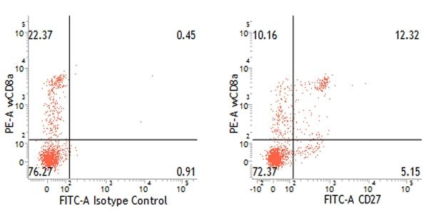 CD27 Antibody   B30C7 gallery image 4