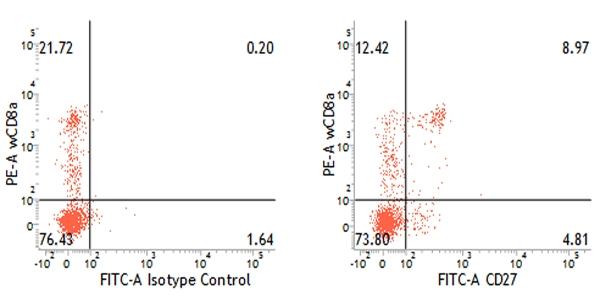 CD27 Antibody   B30C7 gallery image 3