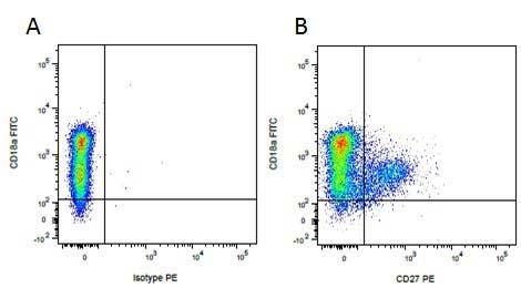 CD27 Antibody   B30C7 gallery image 6