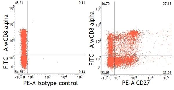 CD27 Antibody   B30C7 gallery image 5