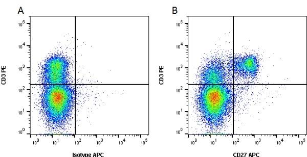 CD27 Antibody   B30C7 gallery image 1
