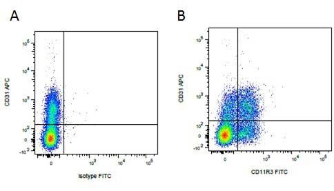 CD31 Antibody   LCI-4 gallery image 2