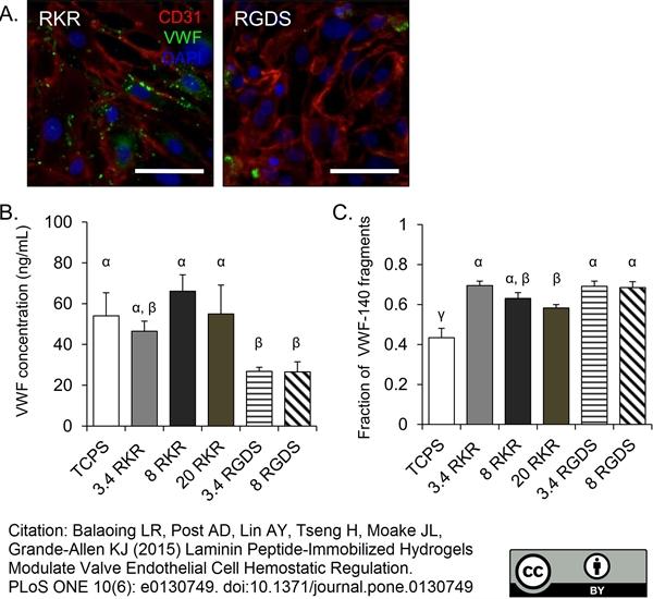 CD31 Antibody | LCI-4 gallery image 4