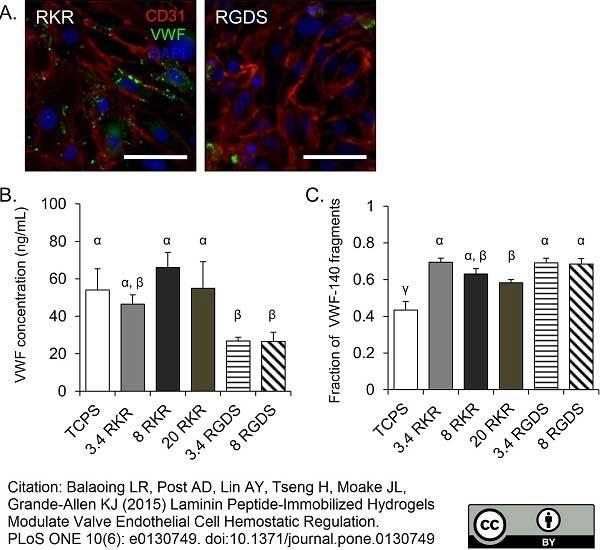 CD31 Antibody   LCI-4 gallery image 3