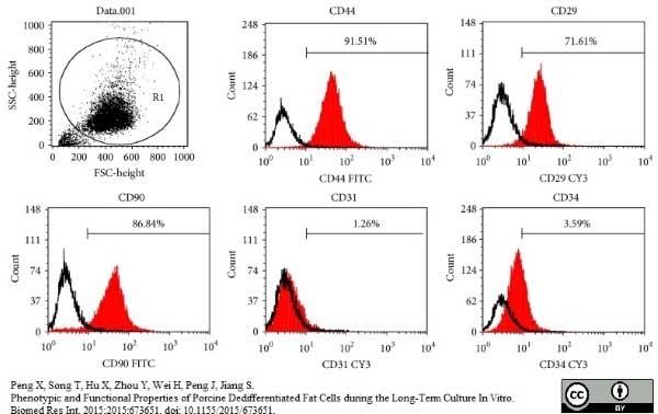 CD31 Antibody   LCI-4 gallery image 7