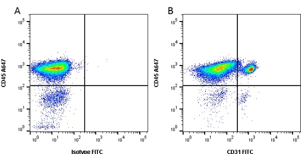 CD31 Antibody   LCI-4 gallery image 1