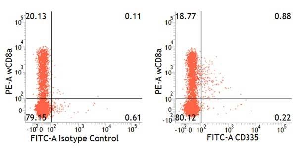 CD335 Antibody | VIV-KM1 gallery image 3
