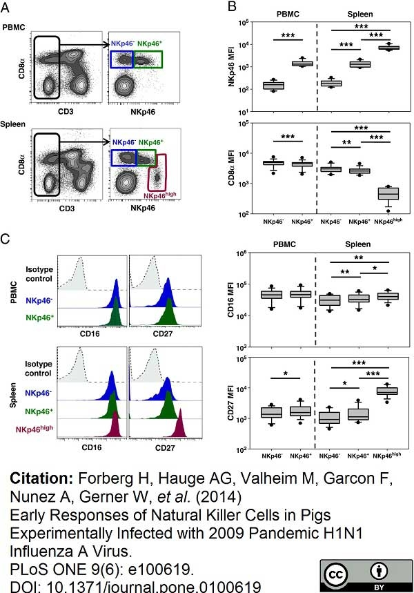 CD335 Antibody   VIV-KM1 gallery image 8