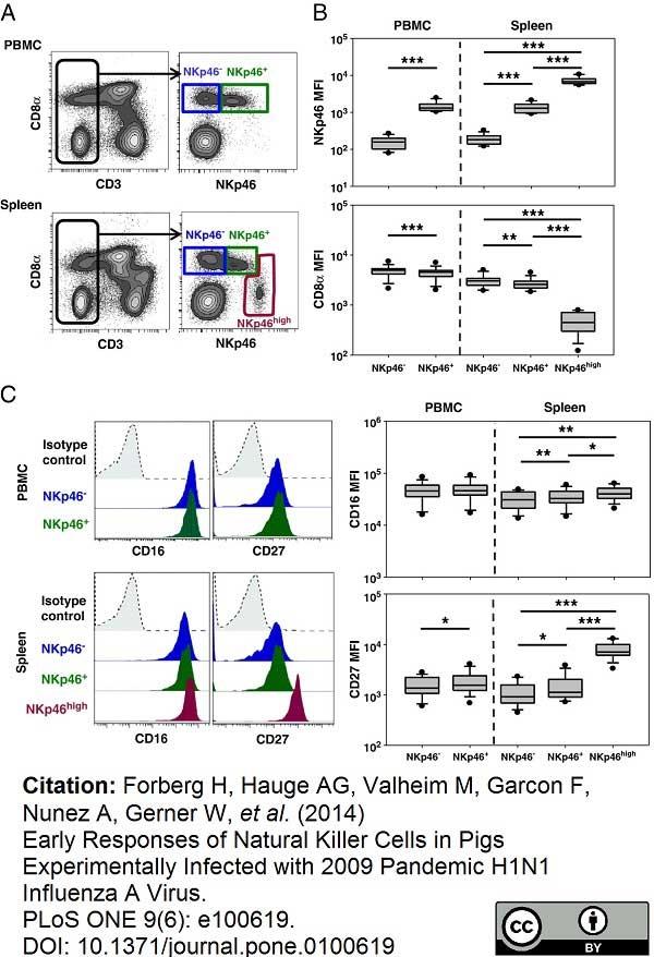 CD335 Antibody   VIV-KM1 gallery image 9