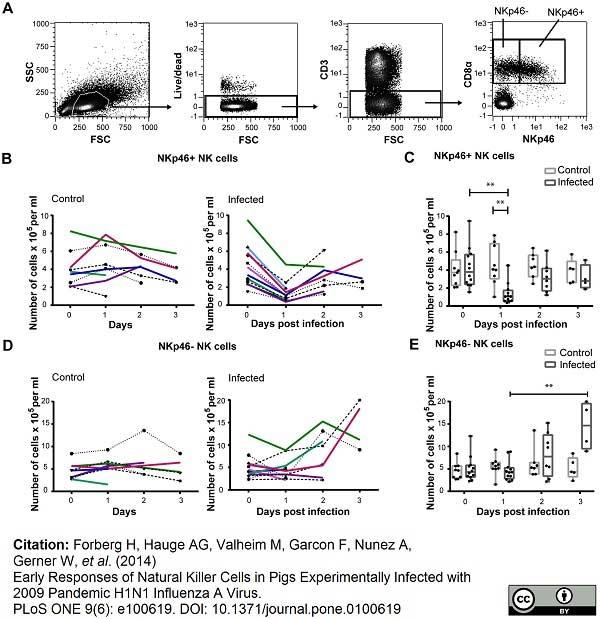 CD335 Antibody | VIV-KM1 gallery image 4