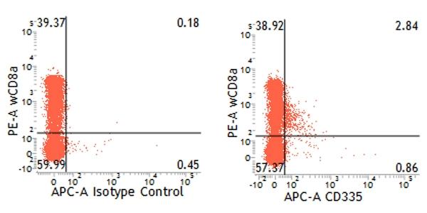 CD335 Antibody   VIV-KM1 gallery image 11