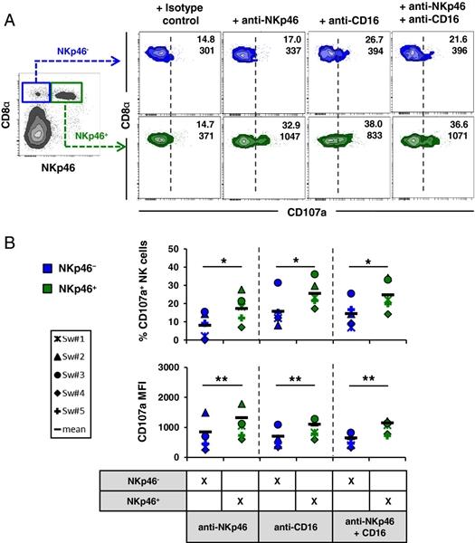 CD335 Antibody | VIV-KM1 gallery image 10