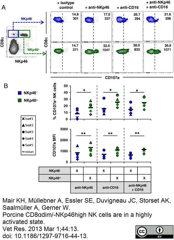 CD335 Antibody   VIV-KM1 gallery image 12