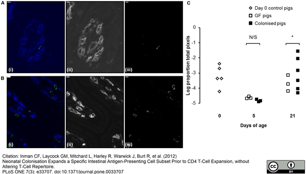 CD4 Alpha Antibody | MIL17 gallery image 4