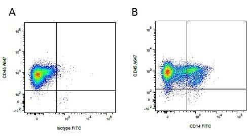 CD45 Antibody   K252.1E4 gallery image 7