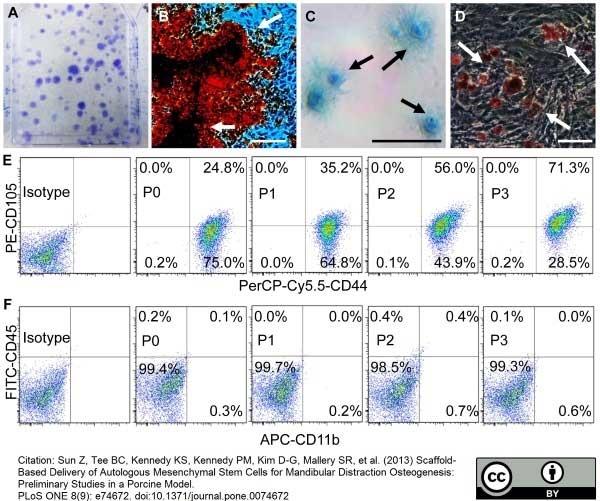 CD45 Antibody   K252.1E4 gallery image 3