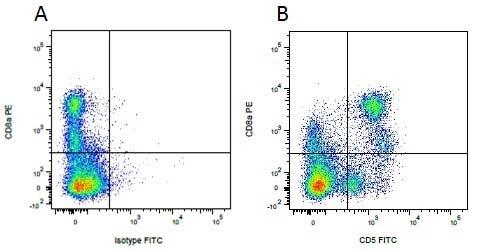 CD5 Antibody | 1H6/8 gallery image 5