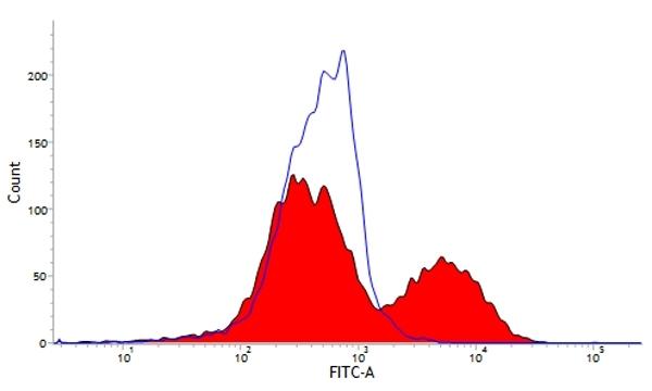 CD6 Antibody | MIL8 gallery image 1