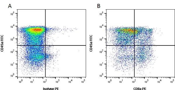 CD8 Alpha Antibody | MIL12 gallery image 1