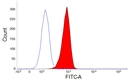 CSF1R Antibody | ROS8G11 thumbnail image 2