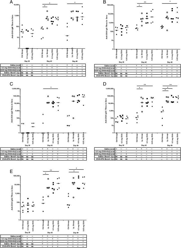 IgA Antibody | K61 1B4 gallery image 1