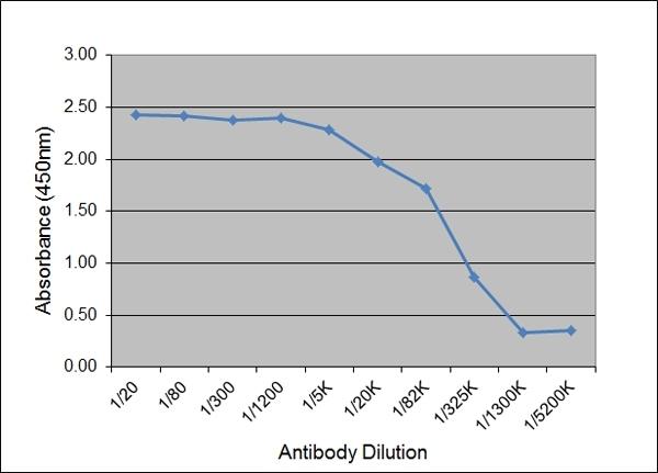 IgG2 Antibody | K68 Ig2 gallery image 1