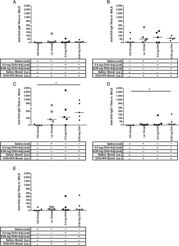 IgG2 Antibody   K68 Ig2 gallery image 3