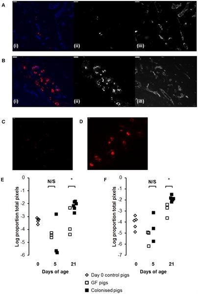 IgM Antibody | K52 1C3 gallery image 3