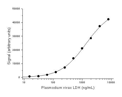 L-LACTATE Dehydrogenase Antibody   AbD13978 gallery image 1