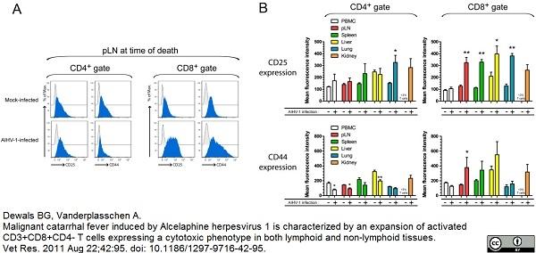 CD44 Antibody   W4/86 gallery image 2
