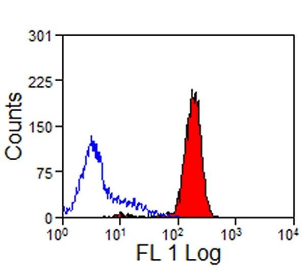CD44 Antibody   W4/86 gallery image 1