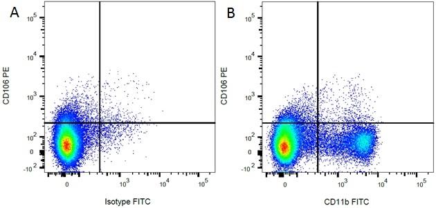 CD106 Antibody | MR106 gallery image 5