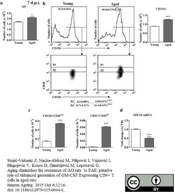 CD11b Antibody   ED8 gallery image 9