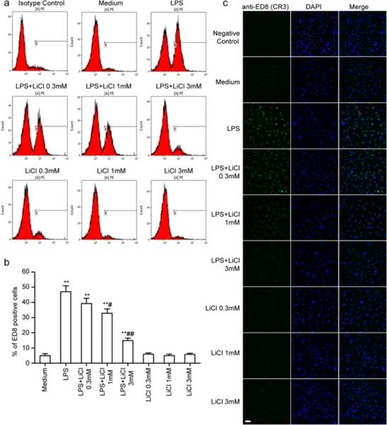 CD11b Antibody | ED8 gallery image 6