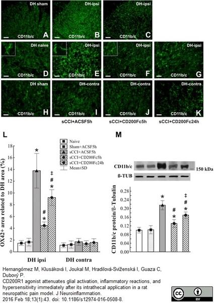 CD11b Antibody | OX-42 gallery image 5